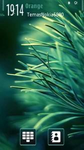 pine-by-gnokkia-1-168x300